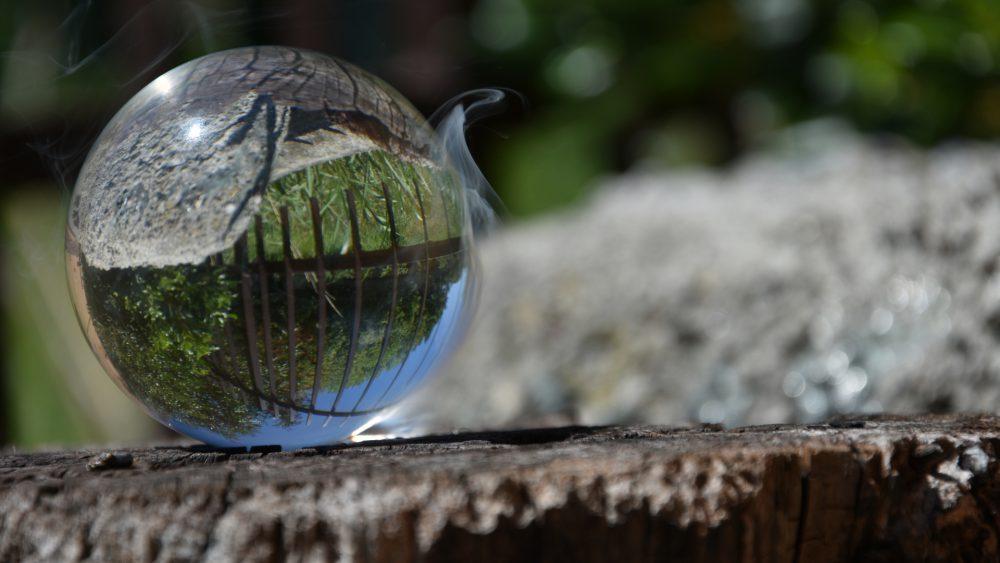 palla sulla pianta tagliata - fumo